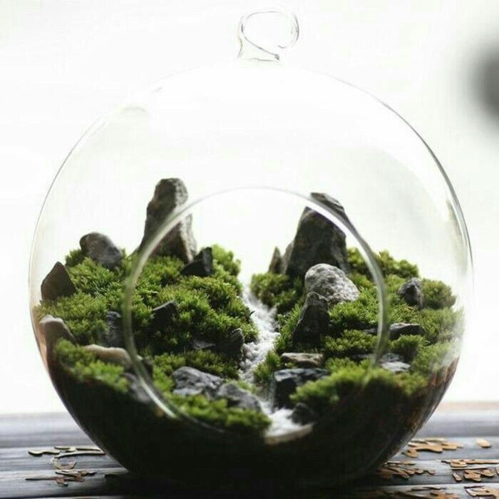 Modern unique glass terrarium ideas for plant reptiles compositions florales composition et fleuri