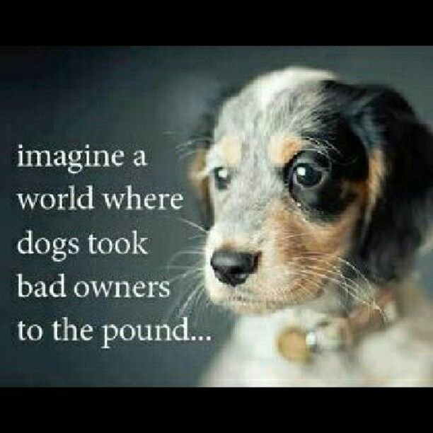 Imagine A World Where Dogs Took Bad Owners To The Pound Dogs I Love Dogs Dog Quotes