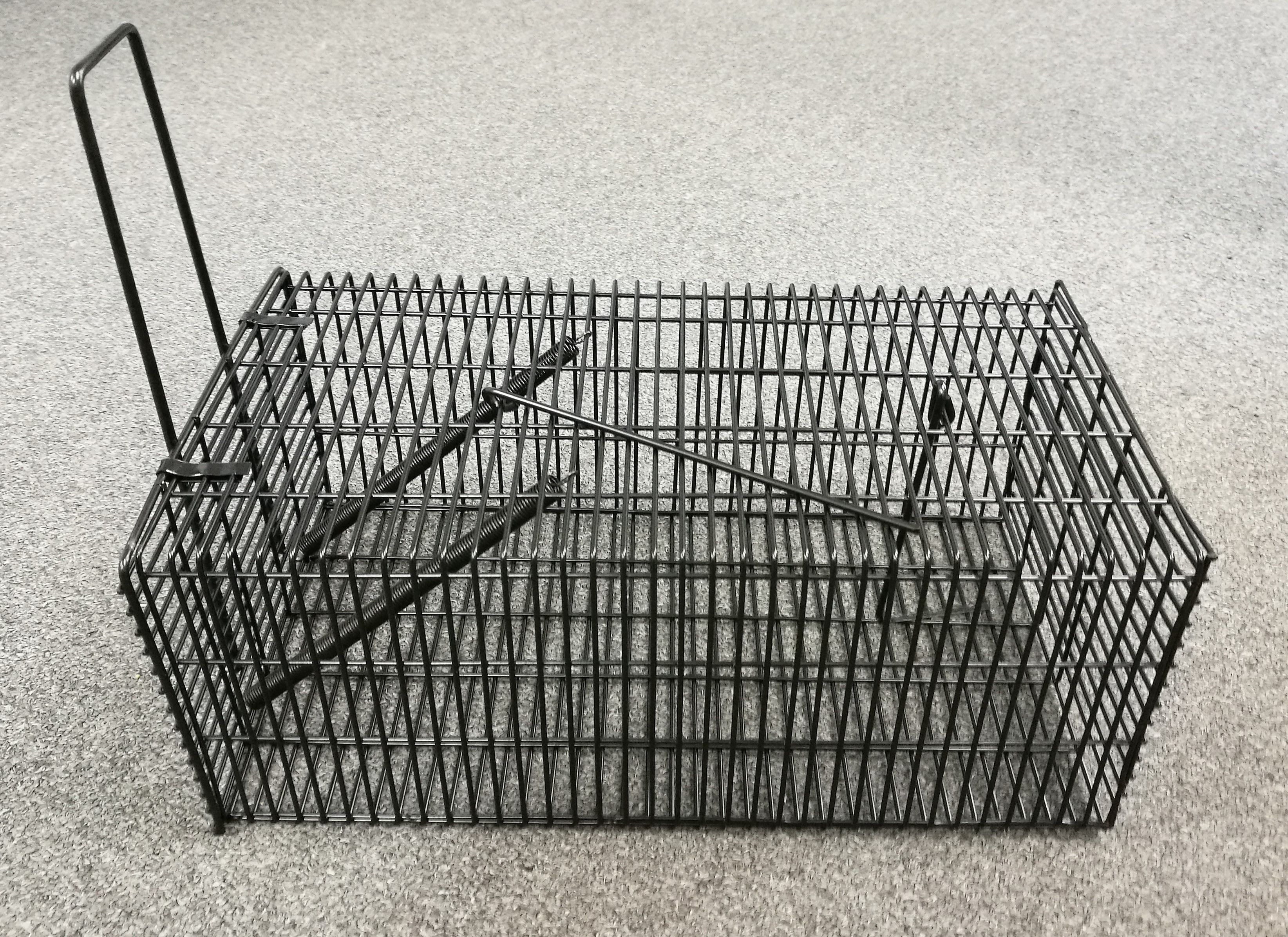 Black Rat Trap/Cage Black rat, Rat traps, Rats