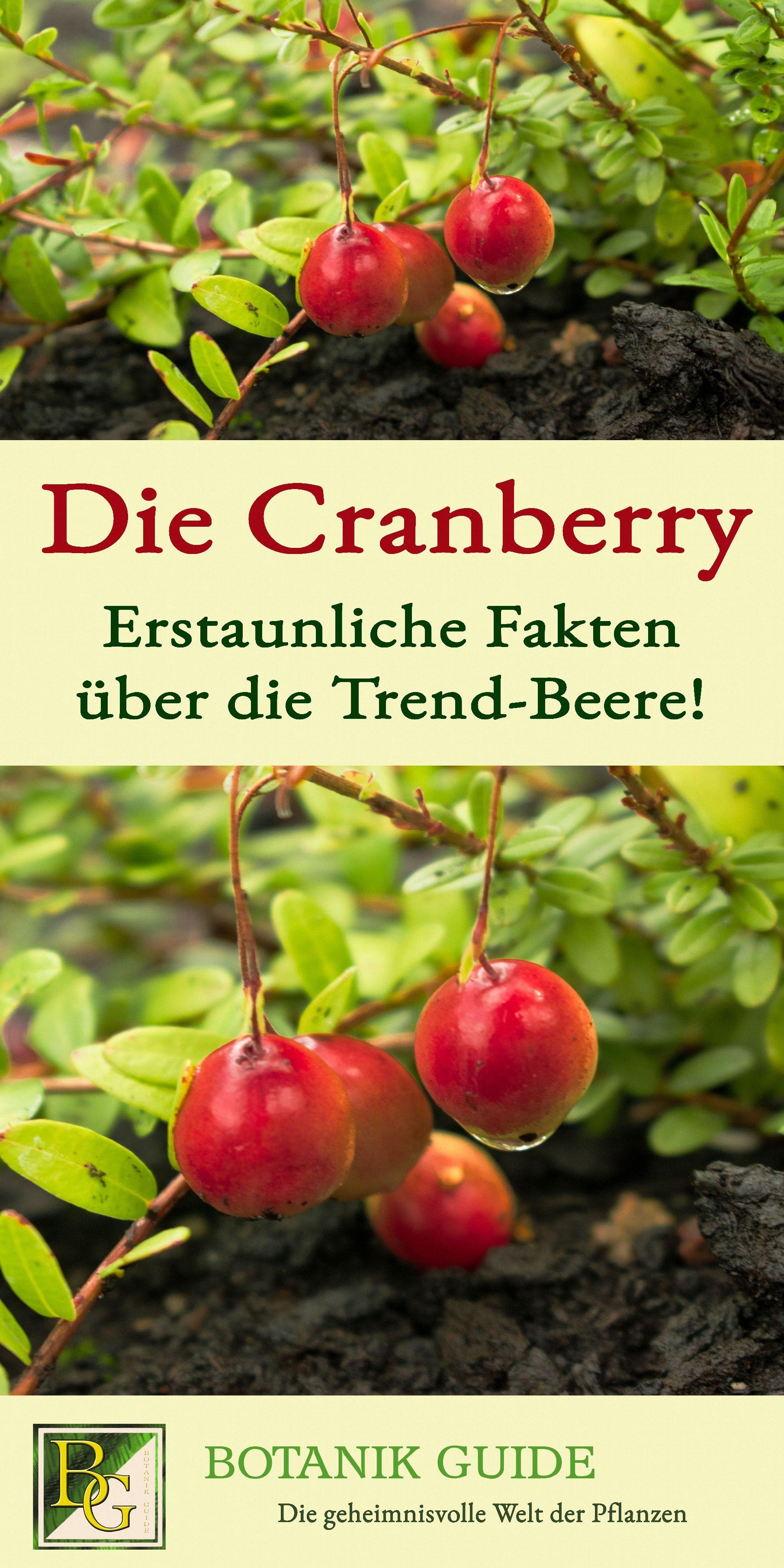 Die Cranberry Erstaunliche Fakten Uber Die Trend Beere Pflanzenkunde Pflanzen Cranberry