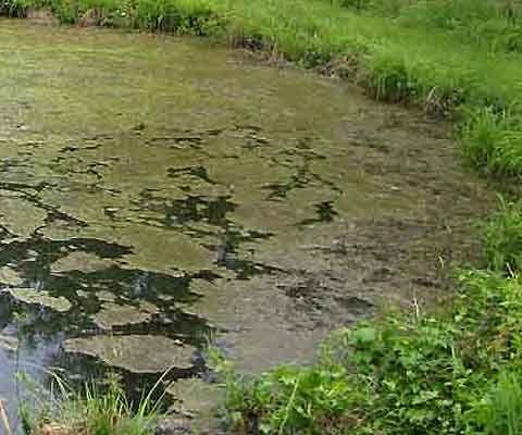 c01d87163920115057c8d3edcdb58634 - How To Get Rid Of Moss In A Farm Pond