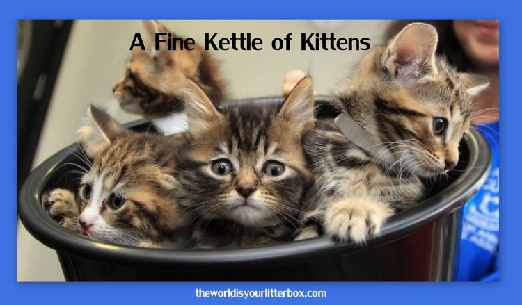 A Kettle of Kittens Kittens and puppies, Kittens cutest