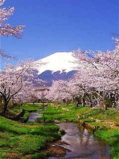 Download free Cherry Blossoms Mount Fuji Japan Mobile Wallpaper ...