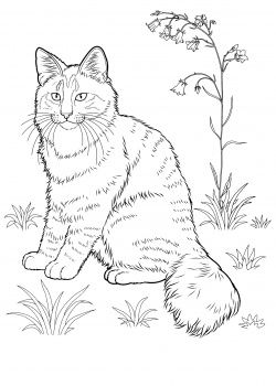 cat color pages printable  Norwegian Forest Cat coloring page