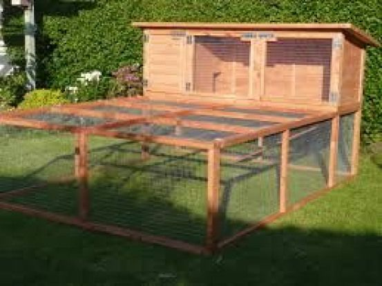 Flemish Giant Rabbit Cage I Like This Now Where To Put It