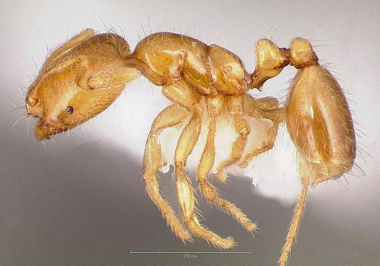 Control Of Thief Ants Or Grease Ants Termitetreatmentcost With Images Termite Control Termites Protecting Your Home
