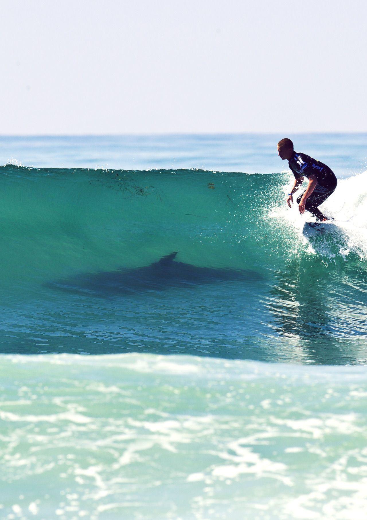 6e2d14732f72 Shark - looks like Reunion Island... so sad