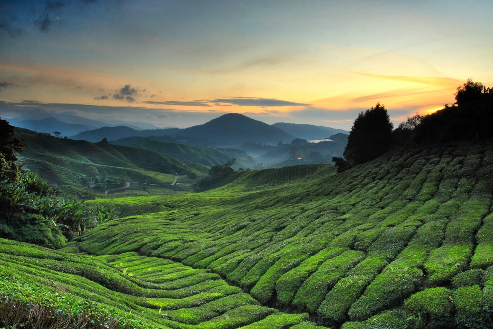 25 Things to Do in The Cameron Highlands (Malaysia in 2020
