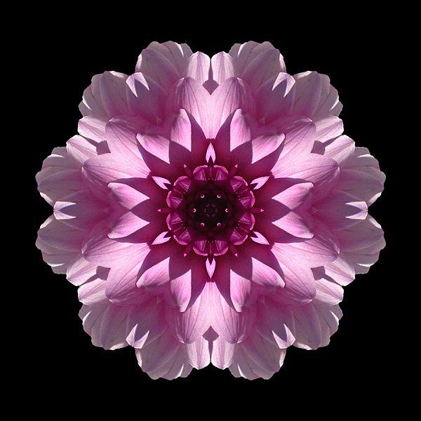 Pin On Flower Mandalas