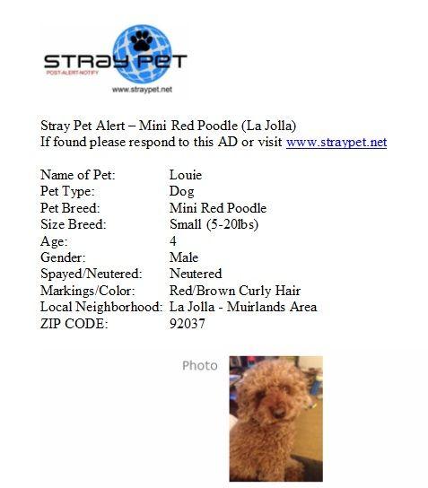 Missing Louie! Pet breeds, Red poodles, Pet dogs