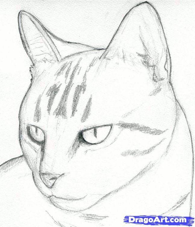 Einen Katzenkopf Zeichnen Eine Realistische Katze Zeichnen