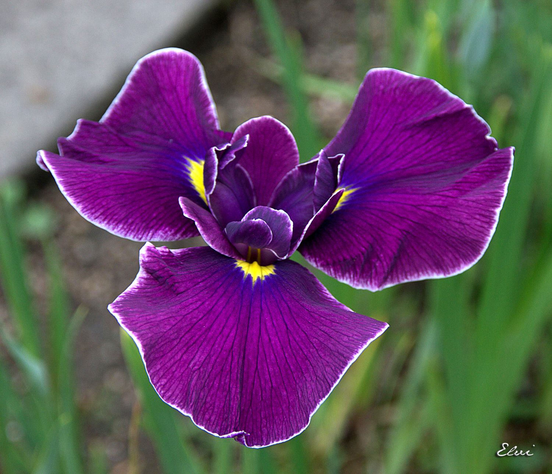 Pin On World Flowers