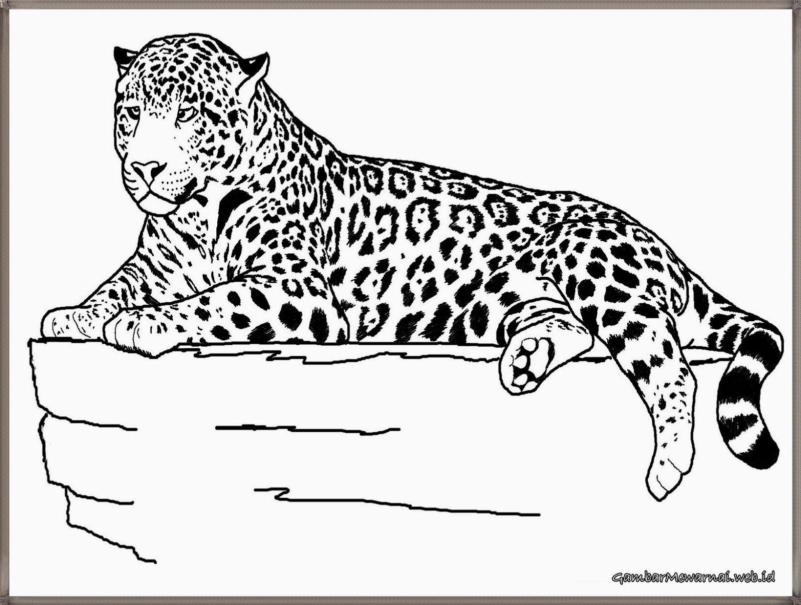 Group Of Mewarnai Gambar Cheetah