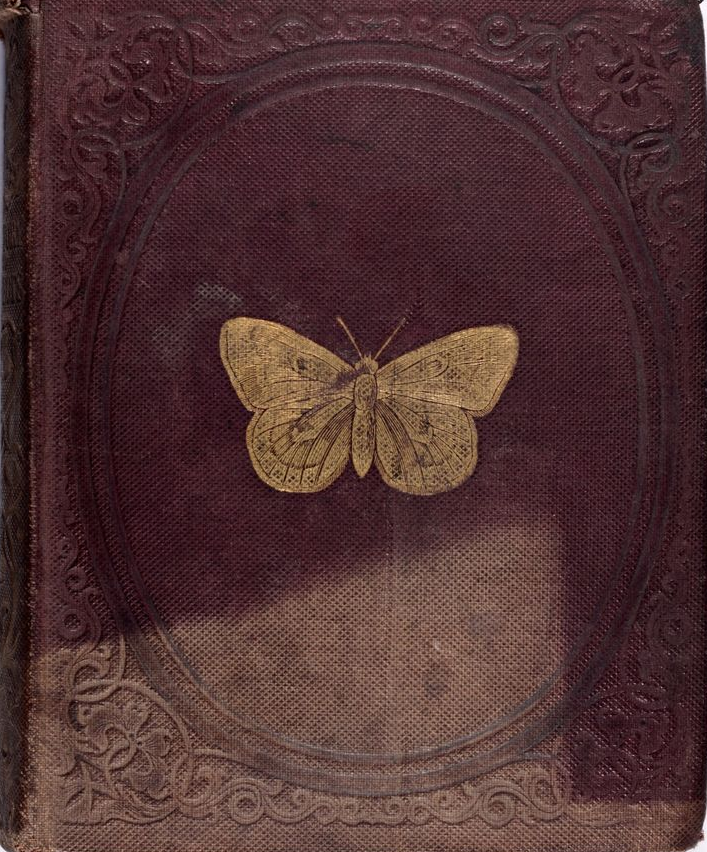 clavicle-moundshroud:  Natural History of Insects 1842 My personal favorite.  ☾♎☽
