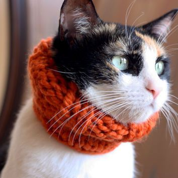the Penelope // knitted scarf chunky cowl for cats // Kitty Cowl in tangerine orange // cat accessory by theLOVEstitch