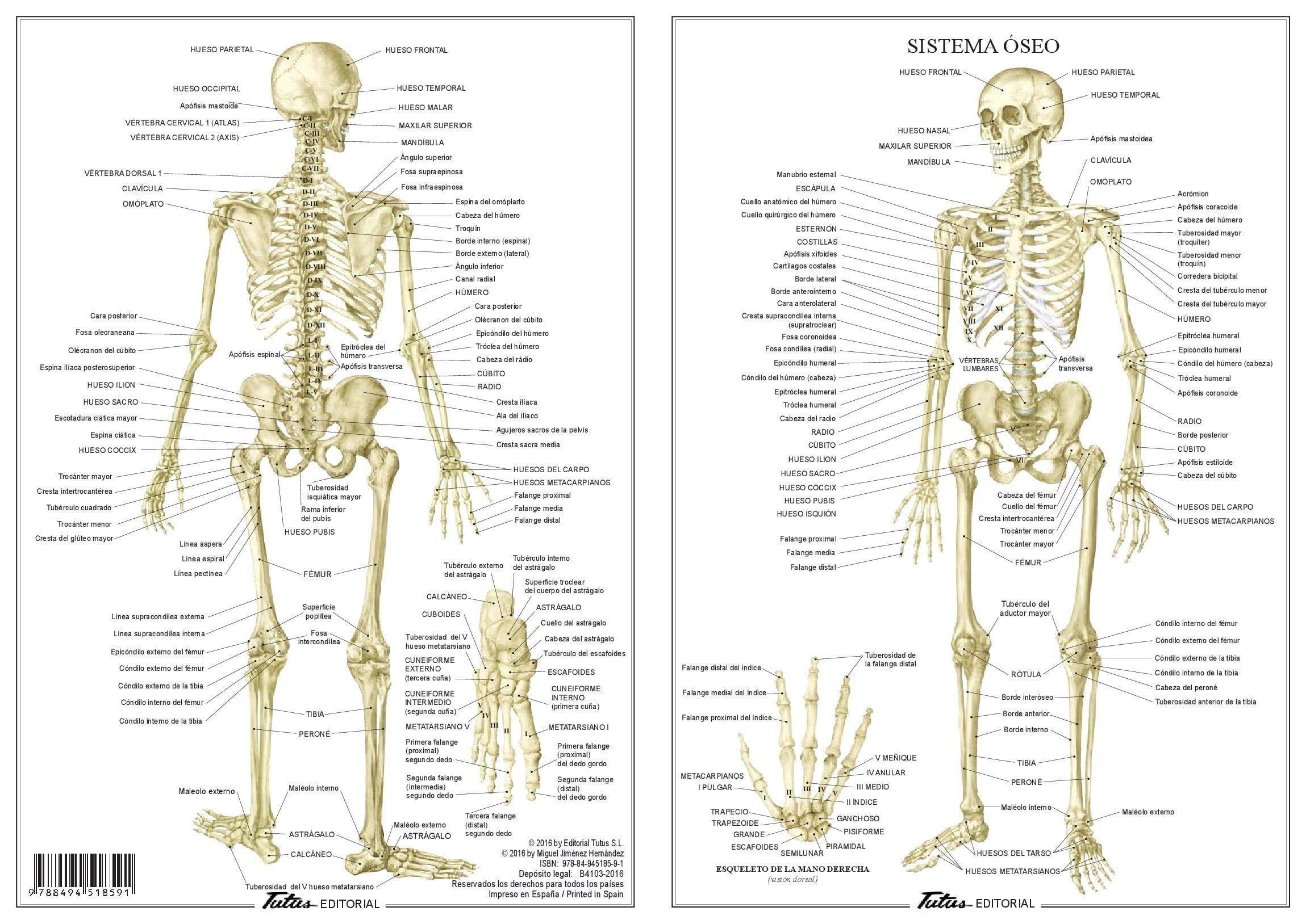 Groß Supra Block Anatomie Fotos - Anatomie Ideen - finotti.info