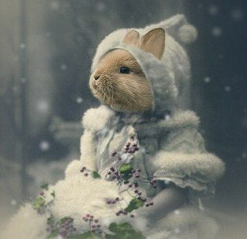 Bonnie - Vintage Bunny 5x7 Print - Anthropomorphic - Altered Photo - Snow - Christmas Photo - Winter Photo - Altered Photo - Blue. $15.00, via Etsy.