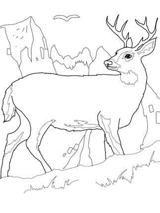 White Tail Deer Coloring Page Supercoloring Com Deer Coloring Pages Animal Coloring Pages Horse Coloring Pages