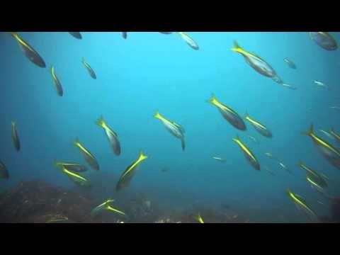 熱海沖、初島のダイビングは少人数で中層の群れを楽しむ
