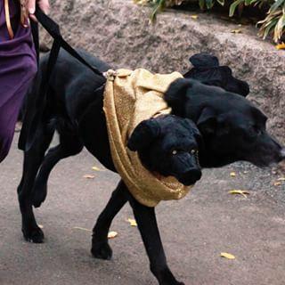 Fluffy Harry Potter Halloween Costumes Harry Potter Dog Costume Puppy Halloween Costumes
