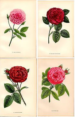 1873 Old print roses