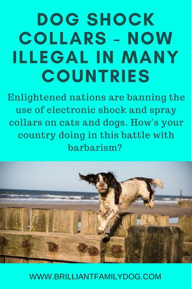 Hooray shock collars banned in uk dog training dog