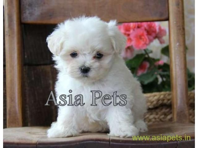 Home In 2020 With Images Pet Store Puppies Online Pet Store