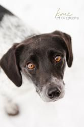 Adopt Jersey On Petfinder Small Dog Rescue German Shorthaired Pointer Dog Dog Adoption