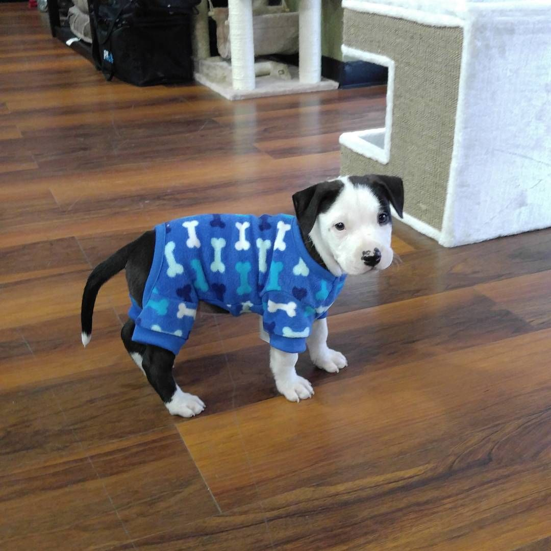 Cutecustomeralert Icey Stopped By Pet Valu Olney Md To Pick Out New Pj S Pet Valu Pets Cute Instagram Posts