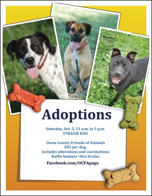 Dog Adoption Event In Mainstrasse Covington Ky Cincinnati Area Saturday Oct 5 11 3 Please Swing By And Say Hello T Dog Adoption Event Dogs Dog Adoption