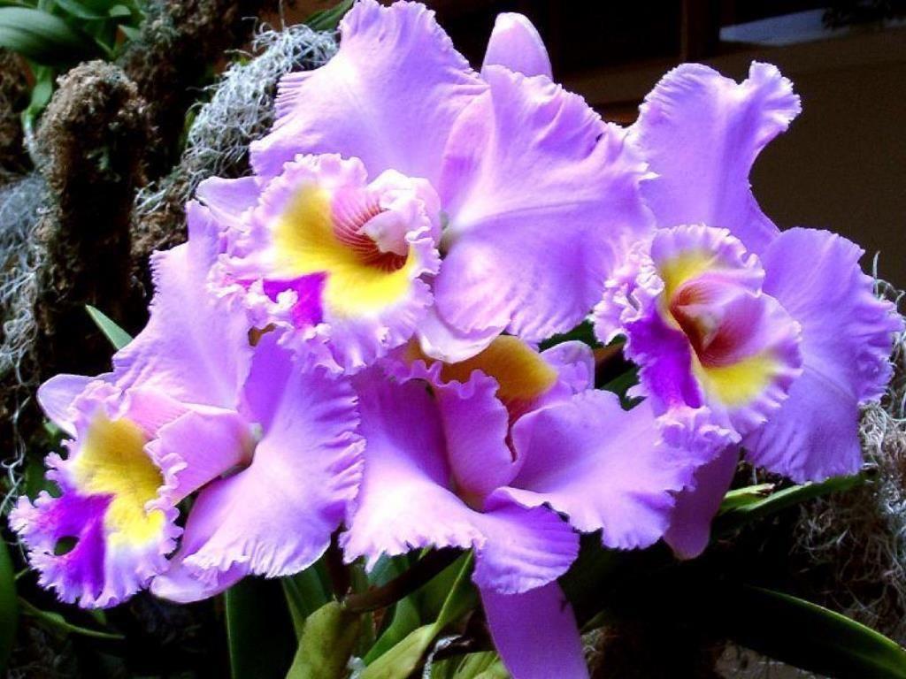 Orchidees 07 Creations Numeriques Fonds D Ecran Gratuits Photos Fleurs Orchidees Et Roses De Toutes Couleurs Free Wallpape Orchidee Fleur Orchidee Photo Fleurs