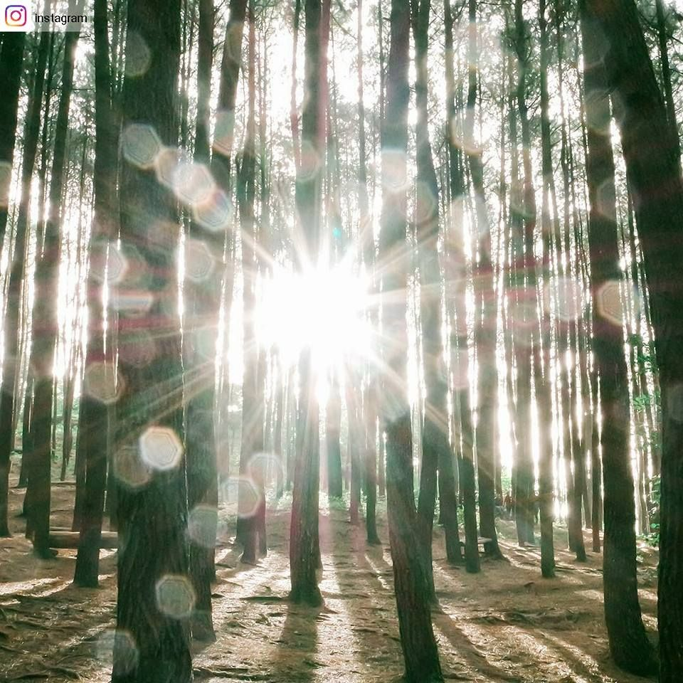 The 12 Ray Of Light Rainbow Orbs In The Forest Like Instagram Instagram Pictures
