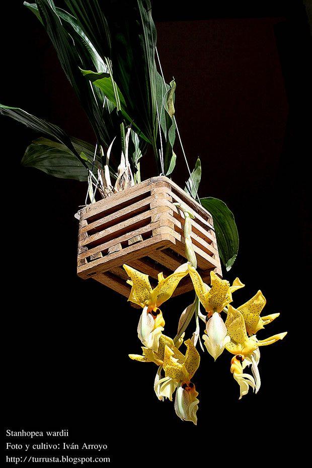 9 Trasplantar Orquideas Orquideas Trasplantar Orquideas Cultivo De Orquídeas