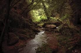 bosco incantato - Cerca con Google