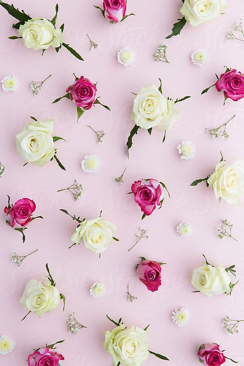 Stocksy United   Royalty Free Stock Photos   Backgrounds   Gallery by Ruth  Black. Stocksy United   Royalty Free Stock Photos   Backgrounds   Gallery