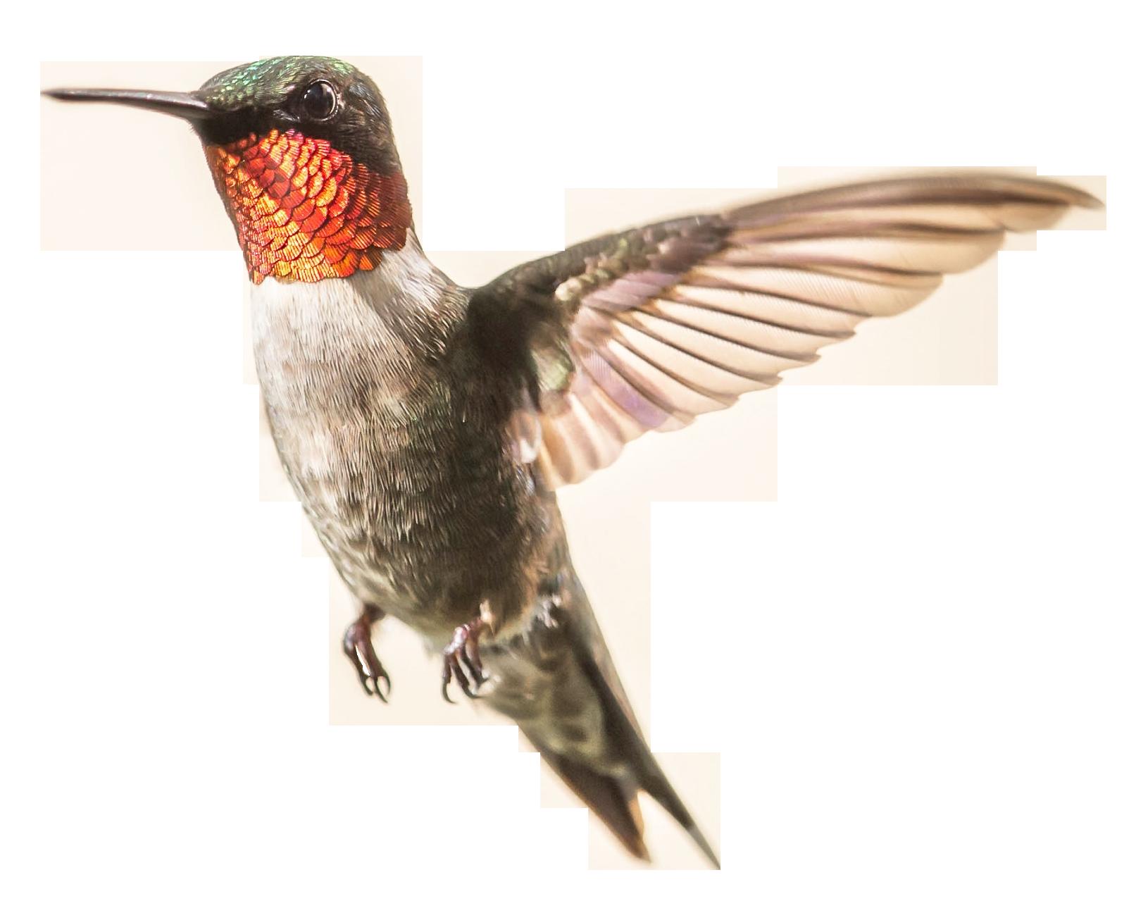 Hummingbird Png Image Png Images Png Image