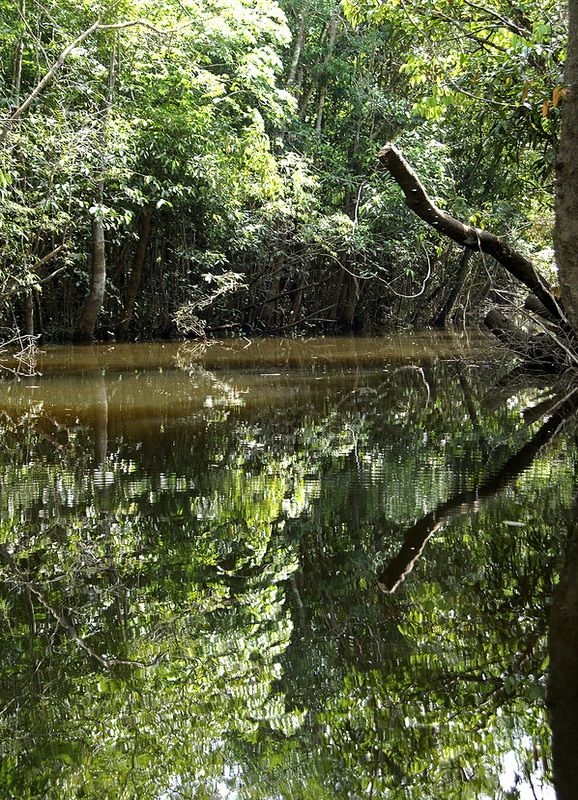 It Is Called The Lungs Of Our Planet Amazon Rainforest Amazon