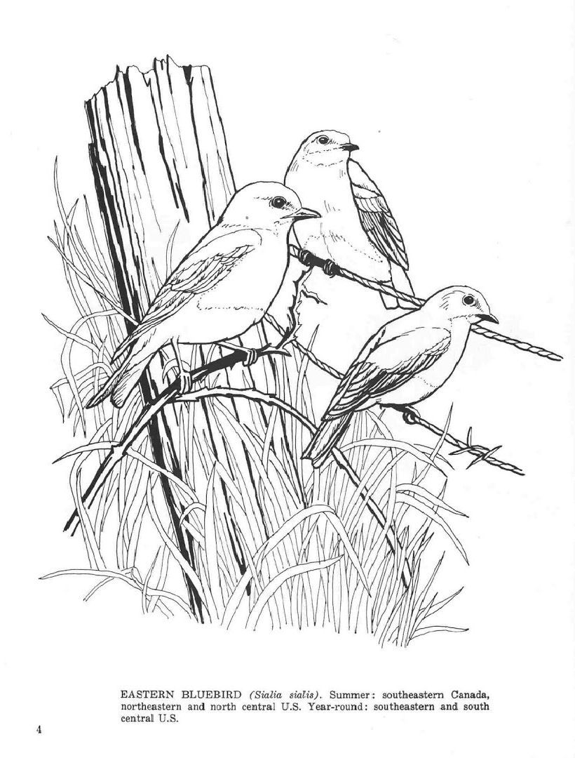 Fifty Favorite Birds In 2020 Bird Coloring Pages Blue Bird Coloring Pages