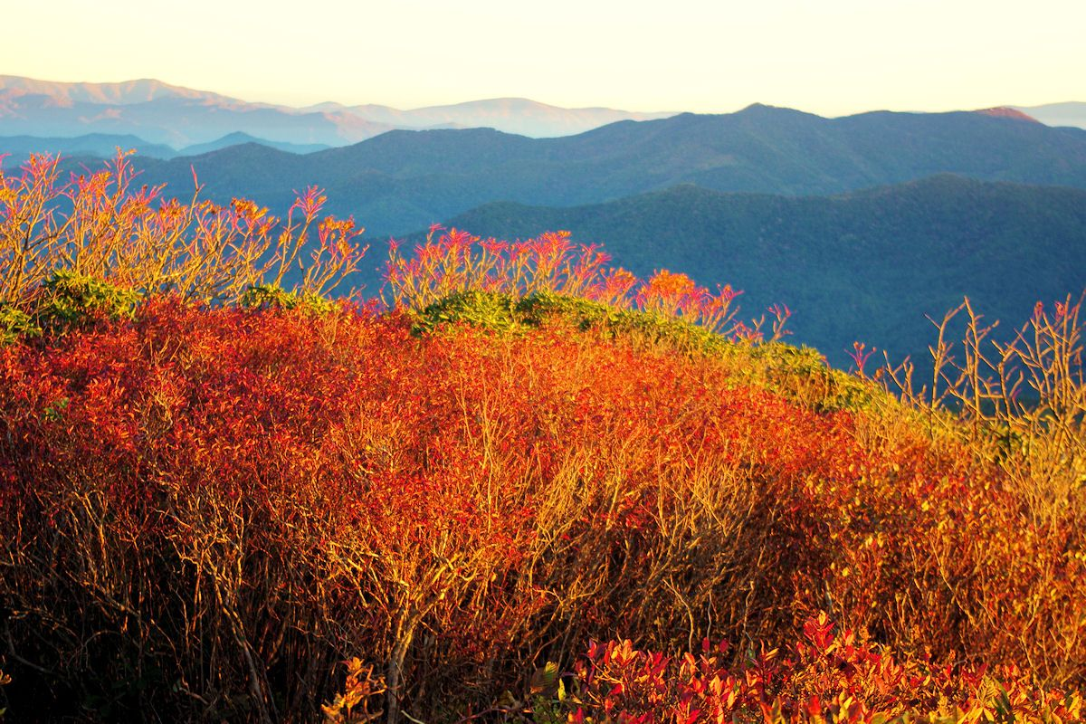 Fall Color Report Asheville And Nc Mountains Craggy