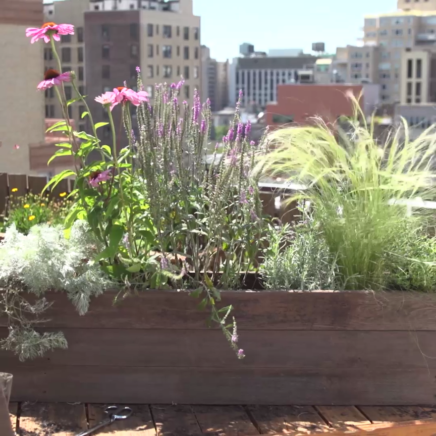 Small Garden Secrets: Window Box Planter Tips