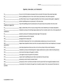 Digestion Worksheet Answers – webmart.me