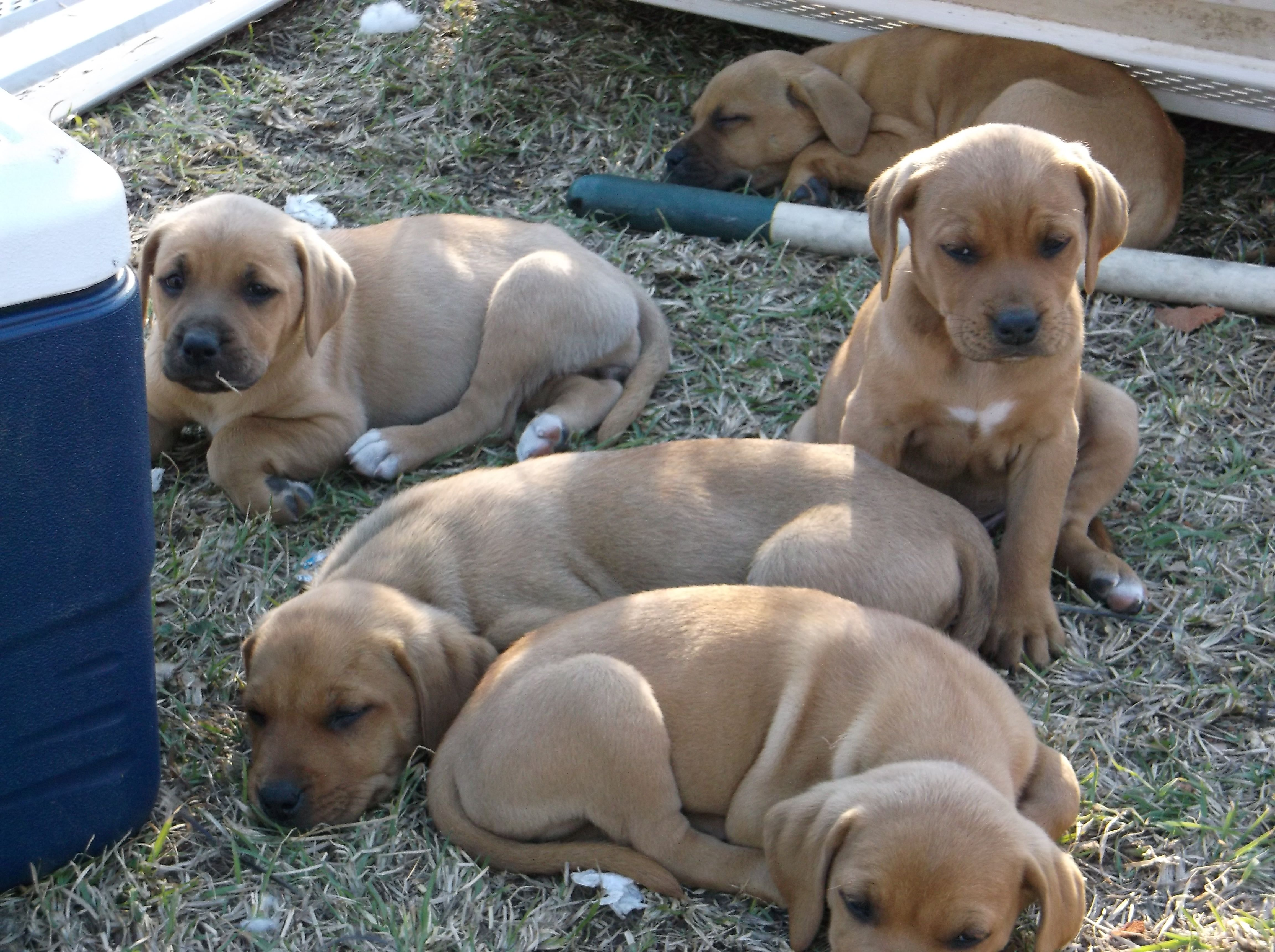 Puppies 8 Weeks Old 2 Males 6 Females Come On Look At Those