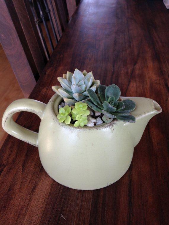 Light green tea pot succulent arrangement