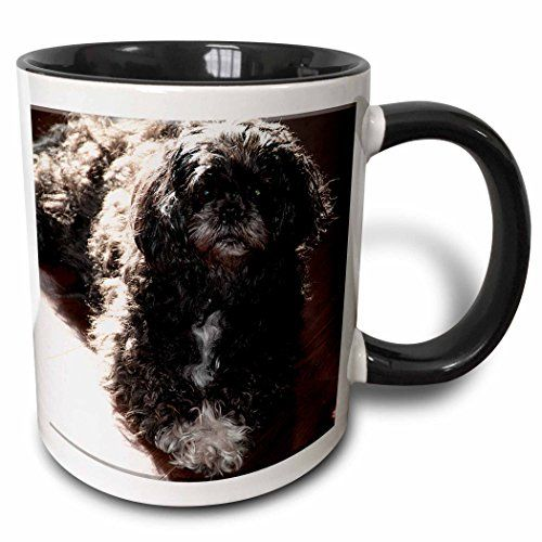 Jos Fauxtographee Realistic - Beautiful Shiatsu Lhasas Doggie Posing Pretty On Hard Wood Floors The Family Pet - 11oz Two-Tone Black Mug (mug_49477_4) 3dRose http://www.amazon.com/dp/B01351DZKM/ref=cm_sw_r_pi_dp_T1Mvwb0BF2AEX