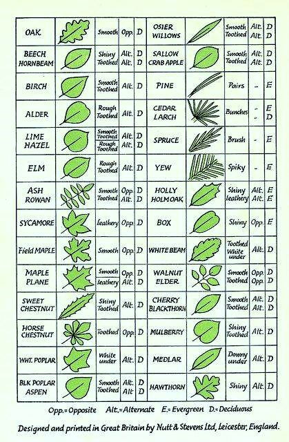 How to identify trees by their leaves also foraging weeds wild rh pinterest