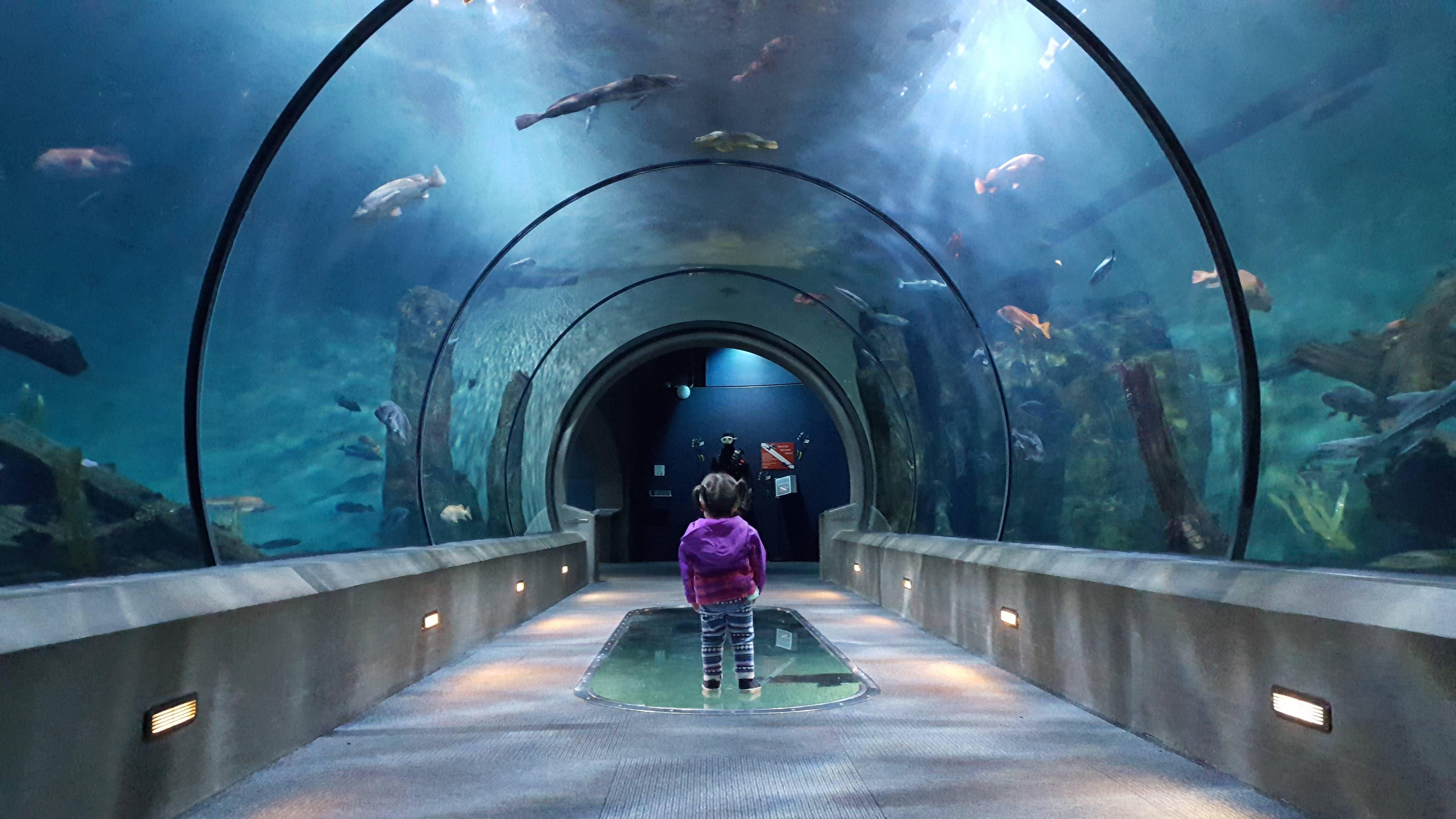c02aee3d3bd98921decef017d307f6fc Frais De Aquarium Osaka Concept