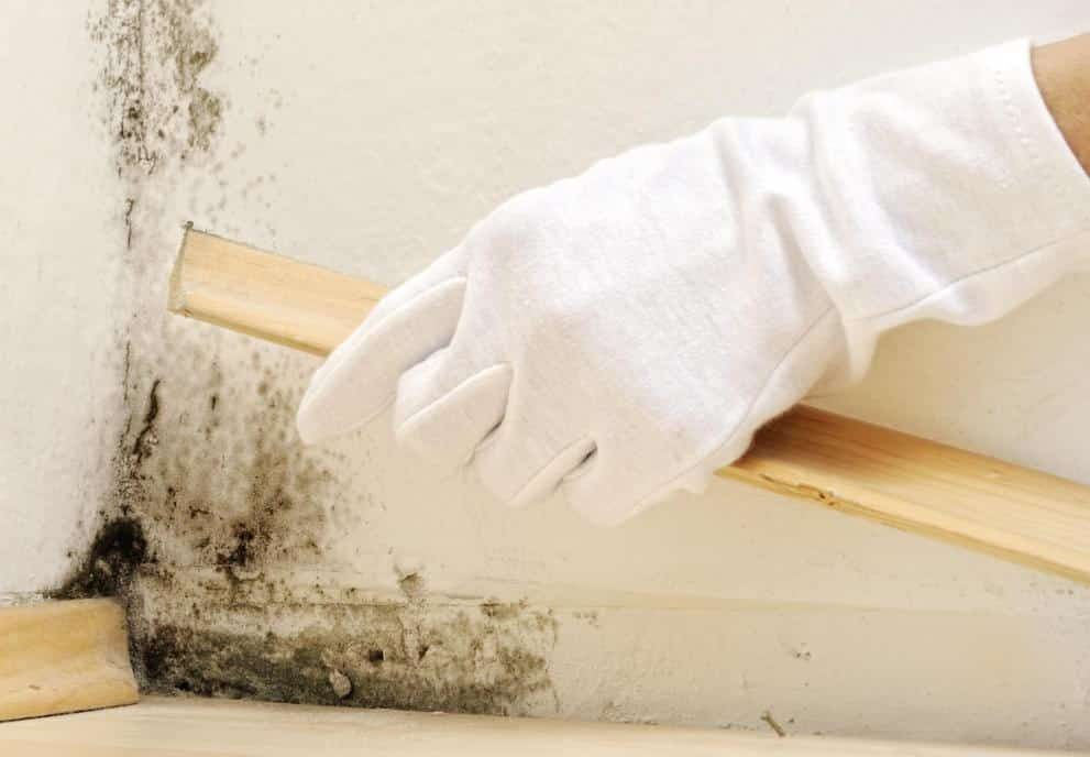 4 Tips On How To Get Rid Of Mold Smell In The House Https Airneeds Com Mold Smell House Mold Smell Get Rid Of Mold Mildew Smell