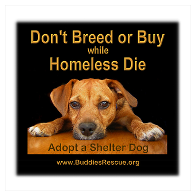 Not Sure Why Anyone Would Spend Money On A Pet When They Can Adopt Free Love Stupidhumans Shelter Dogs Dogs Dog Rescue Groups