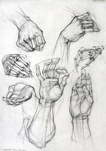 MANOS (427×604):   DATOS INTERESANTES   Pinterest   Dibujo, Anatomía ...