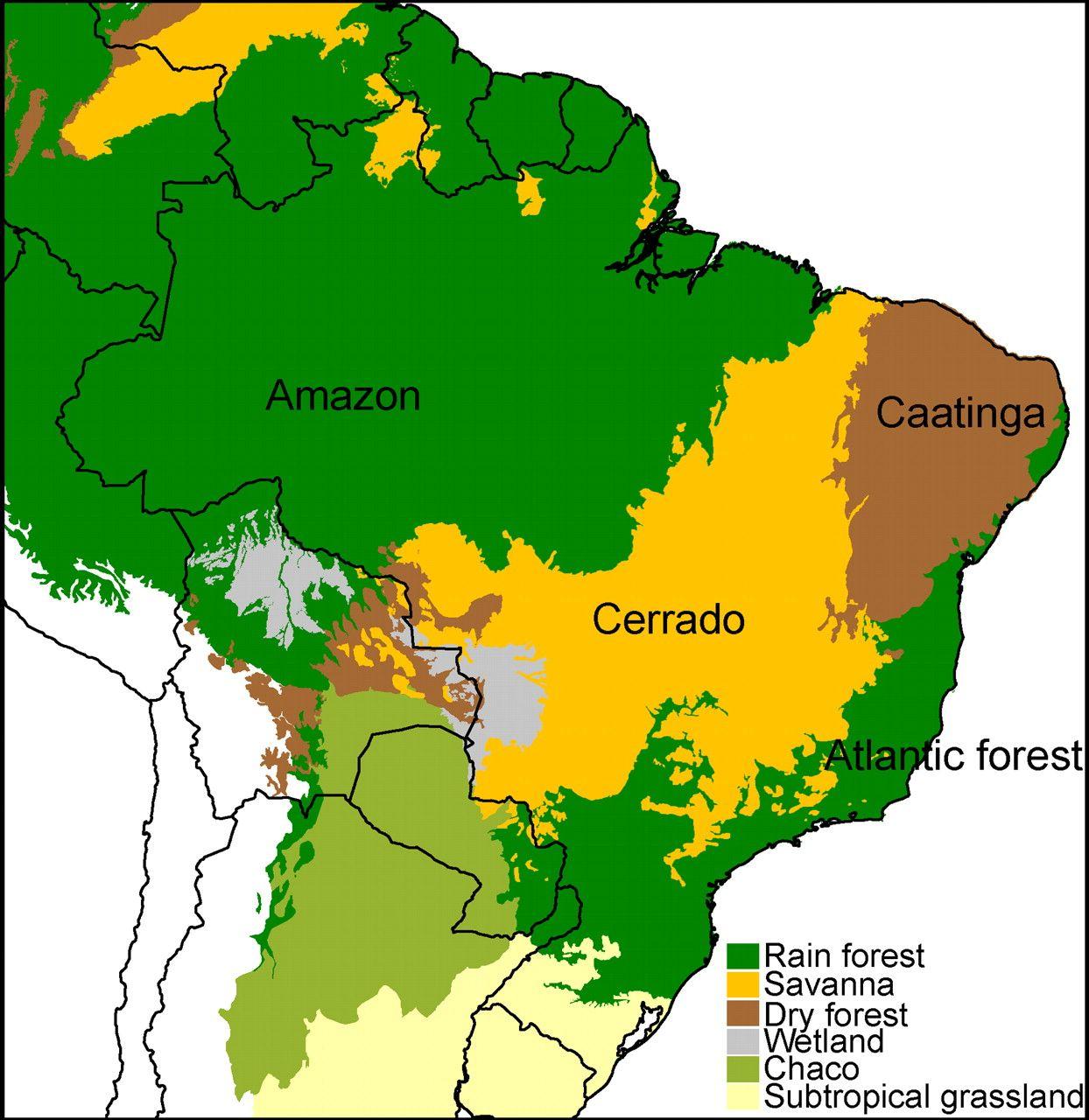 Recent Assembly Of The Cerrado A Neotropical Plant
